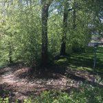 Skov ved Danhostel Kolding